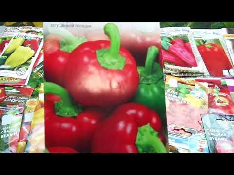 КАКОЙ ПЕРЕЦ ВЫБРАТЬ? СОРТ КОЛОБОК. Обзор Ольги Черновой. | садовый | магазин | томаты | огород | перец | сорт | сад
