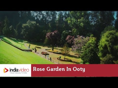 Panoramic view of rose garden in Ooty