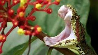 Самые опасные ядовитые змеи в мире