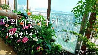vlog그림처럼_나의 식물 이야기/6월 베란다