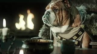 Бравекто - средство от клещей и блох для собак
