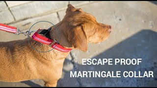 Martingale Dog Collar Collar - How To Measure, Fit, And Use Martingale Dog Collars For Leash Walking