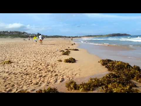 Beautiful Sydney Beach, Dee Why Australia 美麗澳洲悉尼海灘