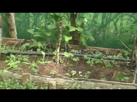 Costa Rica property & farm land for sale by owner – Eco Village
