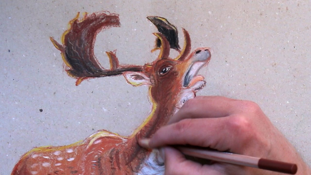 how to draw a deer with pastel pencils youtube