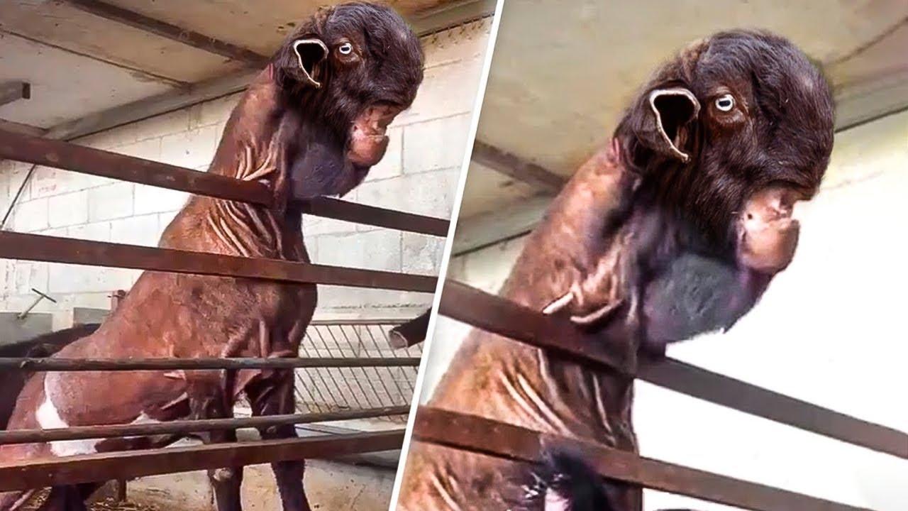 10 seltsamsten Tiere, bei denen es schwer zu glauben ist, dass sie echt sind