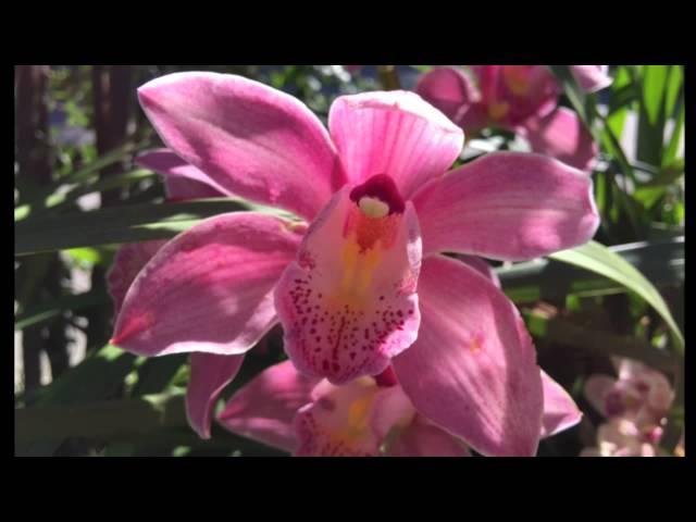 Yoga Nidra Relaxation Meditation De 20min Rotation De La Conscience J Alimente Ma Sante Youtube