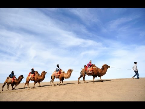 """Time travel"" on camel to ancient Silk Road in desert of China's Dunhuang"