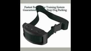 Fastest Bark Collar Training System Review