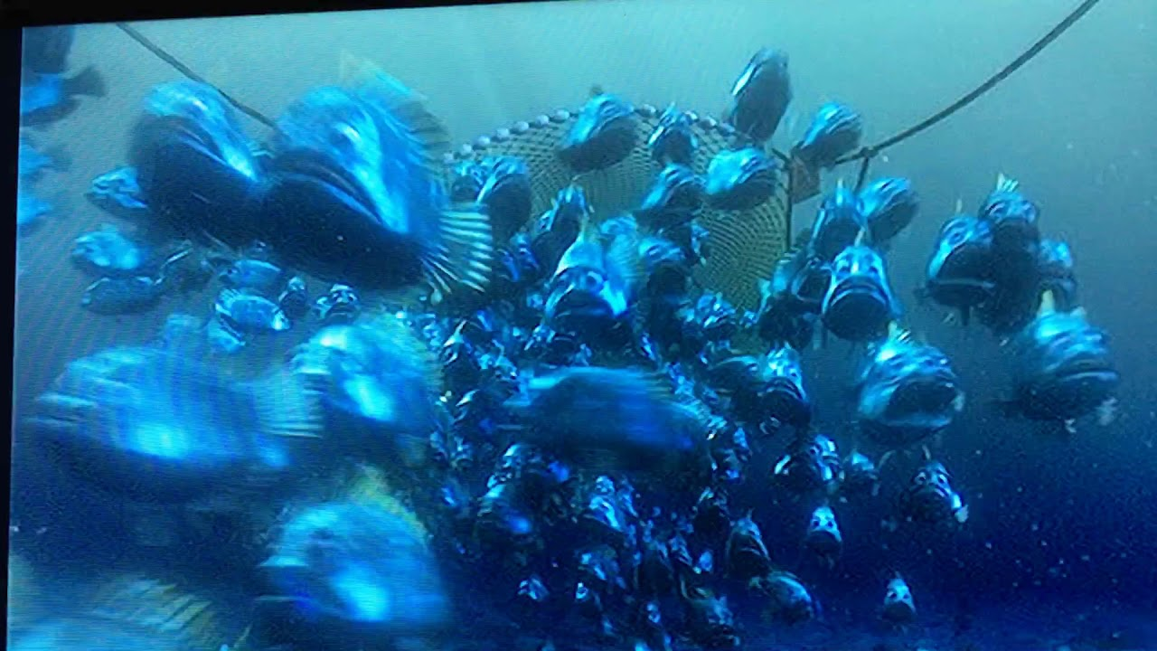 Finding nemo fish caught in net and saved scene youtube for Sjfc fish r net