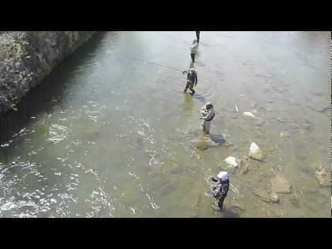 Ganaraska River Fishing 2012