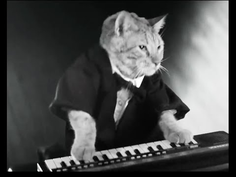 KEYBOARD CAT-new commercial in England!