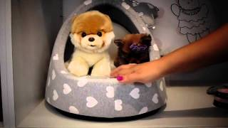 Puppies For Sale Pomeranian Breed Teacup Size.mp4