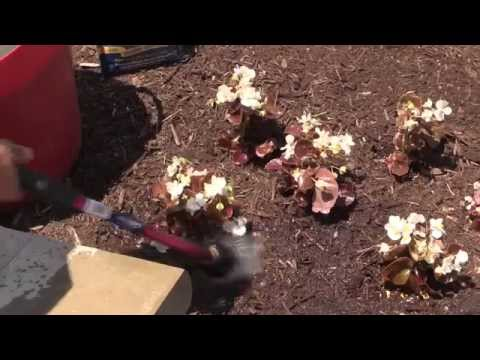How To: Plant Annuals