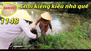 Cây cảnh - Cây kiểng kiểu nhà quê - Nam Việt 1148