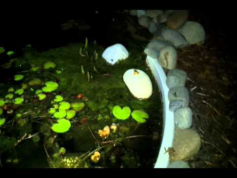 My frog pond at night