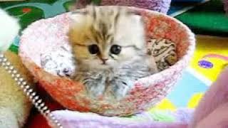 The GIF of a cat