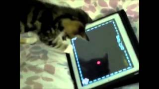 Видео онлайн, лучшее про котов