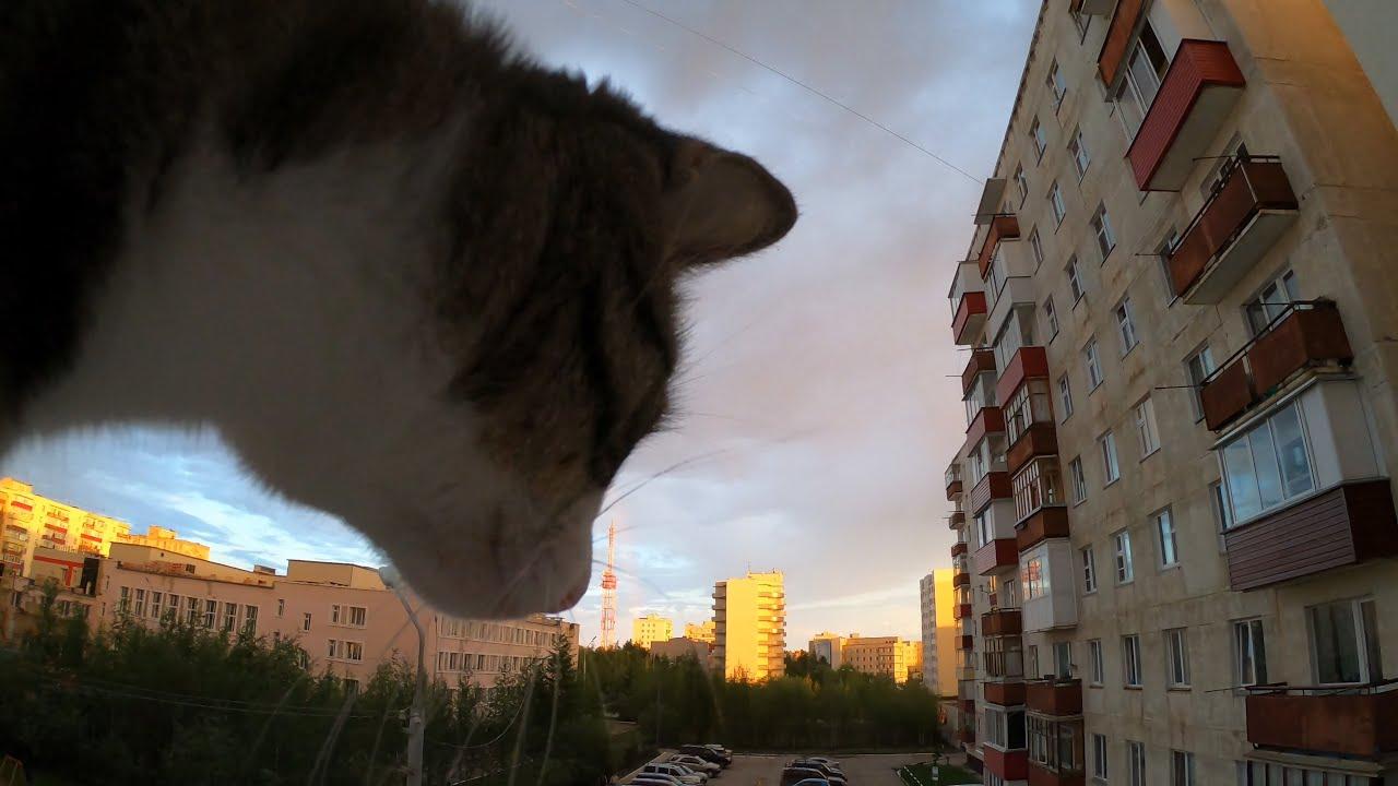 Тайм-лапс (тучи, облака, радуга и кот))) - YouTube