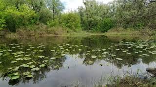 ASMR Nature SOUNDS RELAX FOREST RAIN for SLEEP Натуральные АСМР ЗВУКИ ПРИРОДЫ РЕЛАКС ДОЖДЬ ДЛЯ СНА