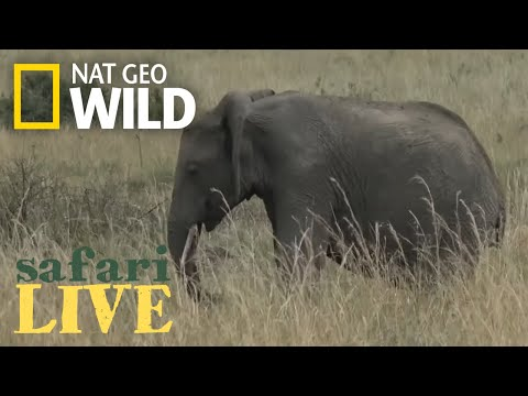 Safari Live - Day 37 | Nat Geo WILD