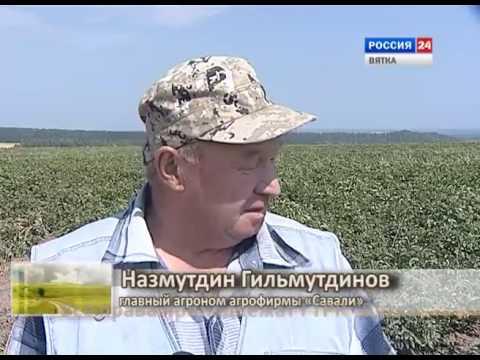 Дороги деревенские. Хозяйства Малмыжского района (27.08.2016)(ГТРК Вятка)