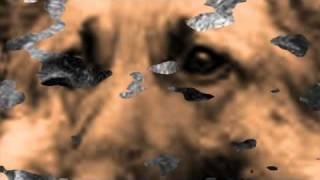 Любовь и Память не горят- Трагедия глазами Собаки