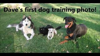 Dog Training Sacramento The Superdog Movie, Sacramento Dog Training