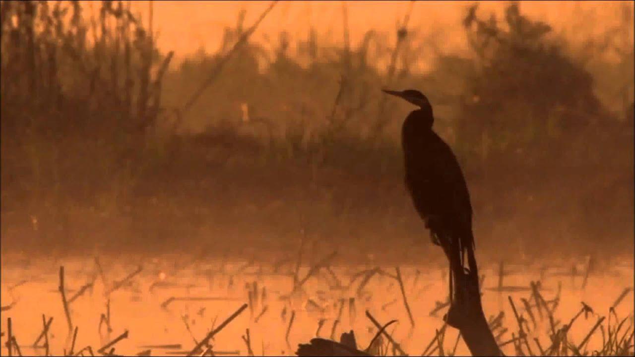 tom-waits-rainbirds-beatriz
