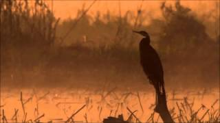 Tom Waits - Rainbirds