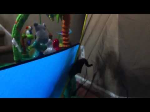 Sugar Gliders in the new tent & Sugar Gliders in the new tent - YouTube