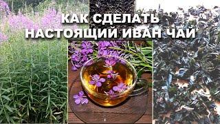 Иван чай (Кипрей, Копорский чай) Заготовка, ферментация, сушка самый простой способ