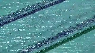東京都選手権2016 女子100m自由形(池江璃花子選手)