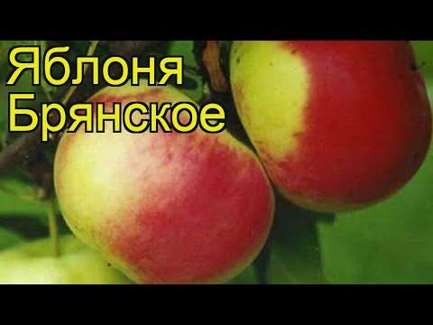Яблоня Брянское (Яблоня Bryanskoe). Краткий обзор, описание характеристик, где купить, саженцы
