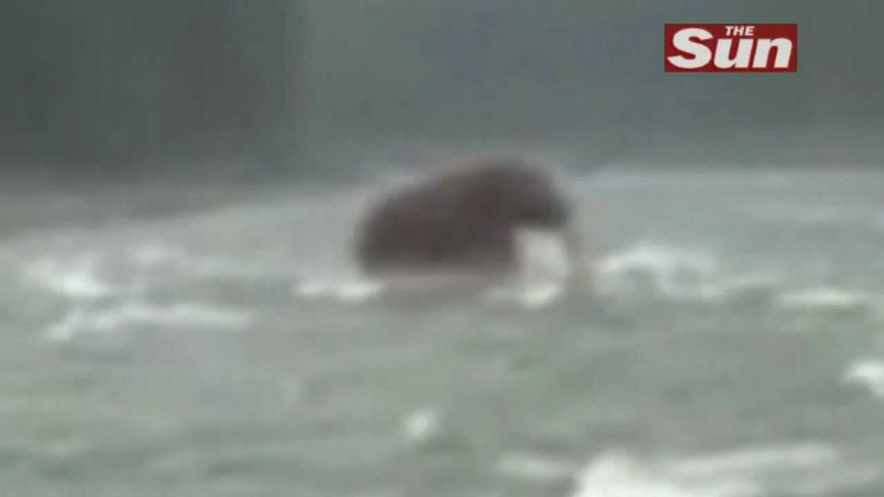 Footage of a Woolly Mammoth spotted in Siberia - YouTube
