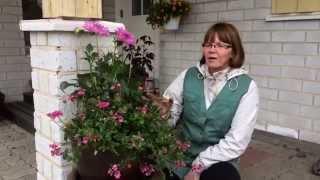 Pesiölän puutarha: Yhdistelemme värejä