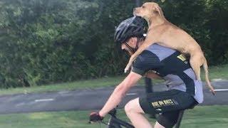 Der Radfahrer findet angefahrenen Hund. Was als nächst...