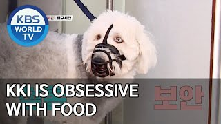 Kki is obsessive with food [Dogs are incredible/ENG/2020.06.03]