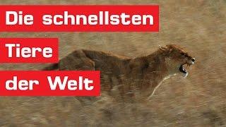Die 15 schnellsten Tiere der Welt
