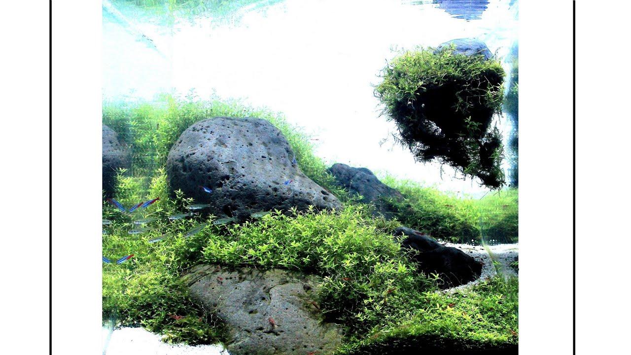 Aquascape Sandy Hill Youtube