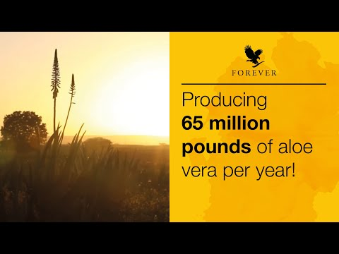 Our Aloe Fields In The Dominican Republic | Forever Living UK & Ireland
