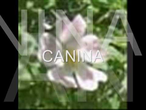 Tipos de flores cbtis155 youtube - Tipos de plantas ...