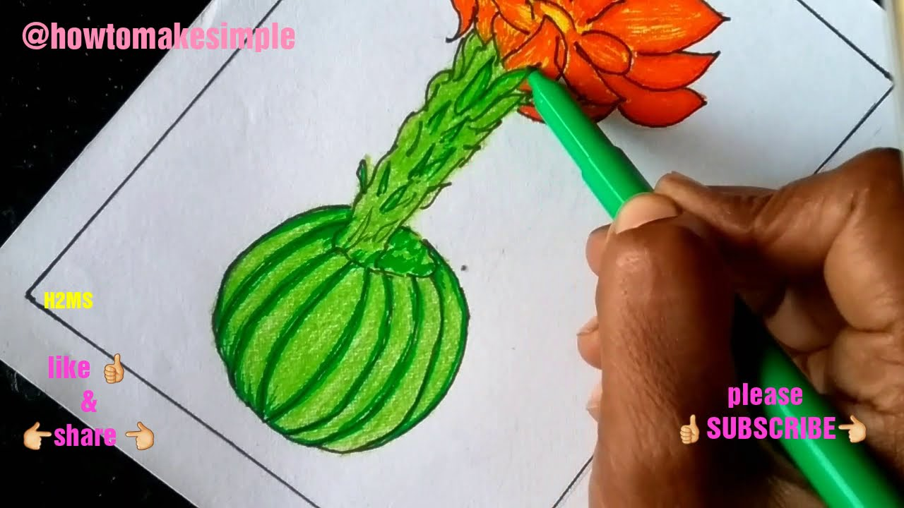how to make simple blooming Cactus drawing   Cactaceae   how to draw a cactus/cacti #12,H2MS drawing