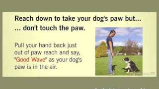 Hollywood Dog Trainer - 4  Step By Step Dog Tricks - Obedience For Dogs