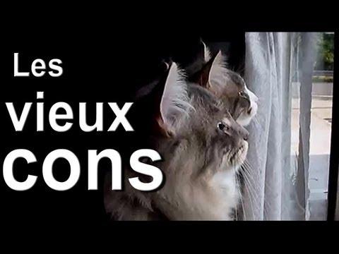 LES VIEUX CONS - PAROLE DE CHAT