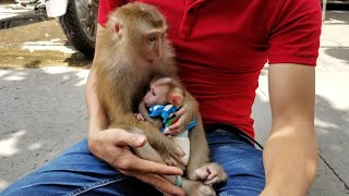 Monkey Baby Nui Nui came to play with Bi and LaLa