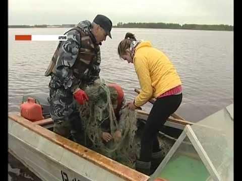штраф за ловлю рыбы в нерест сетью