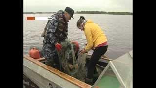 видео Штраф за ловлю рыбы сетями в России