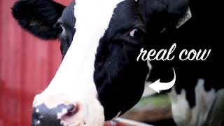 What Is LACTAID: The Farm and Cows That Make It - :13 (2) | LACTAID®