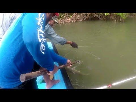 FISHING In A NEW BOAT - MULTI-SPECIES - SNAPPER, CATFISH - Trinidad, Caribbean